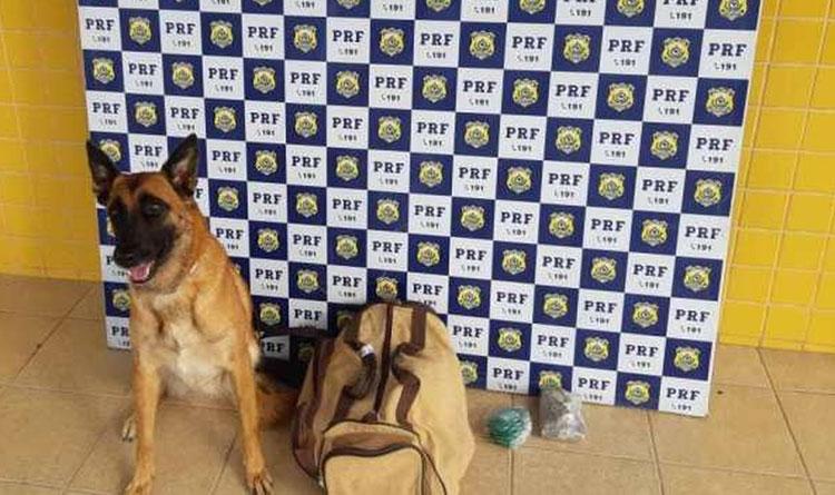 Jovem é preso após cão farejador encontrar drogas em ônibus de turismo no interior da Bahia