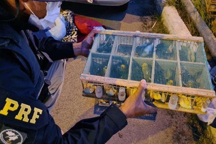 Jequié: Pássaros silvestres são resgatados em situação de maus-tratos na BR-116