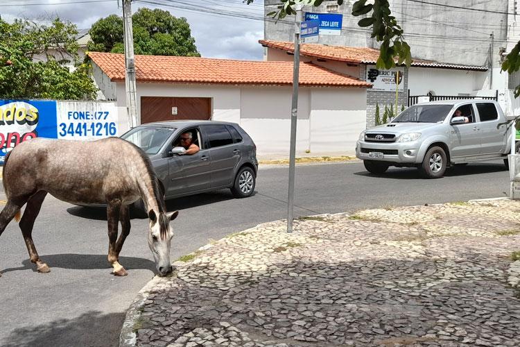 Brumado: Fazendo praça da prefeitura de pastagem, equinos quase provocam acidente de trânsito