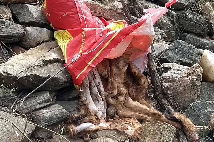 Brumado: Ossos de abate clandestino são descartados no Rio do Antônio prejudicando moradores do Esconso