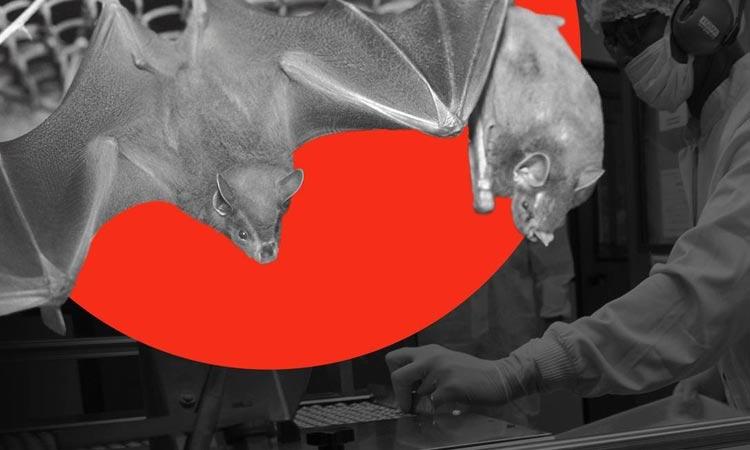 Cientistas da Fiocruz caçam morcegos para barrar nova pandemia