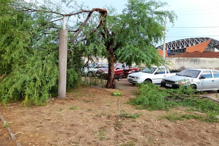 Chuva forte provoca queda de árvores em Brumado