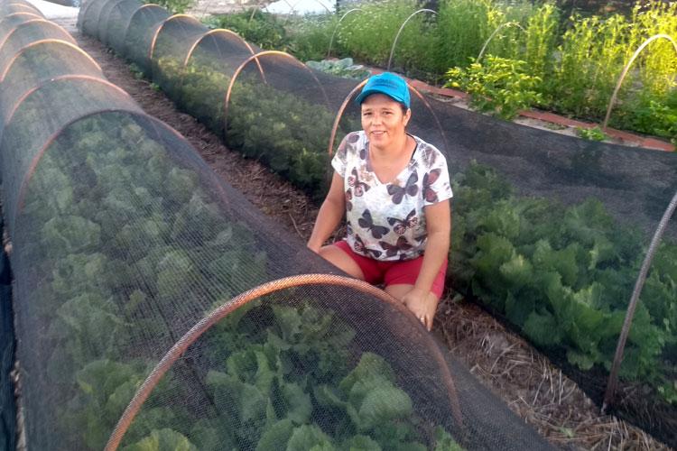 Família cria estufa de hortaliças orgânicas e ganha preferência nos supermercados de Brumado