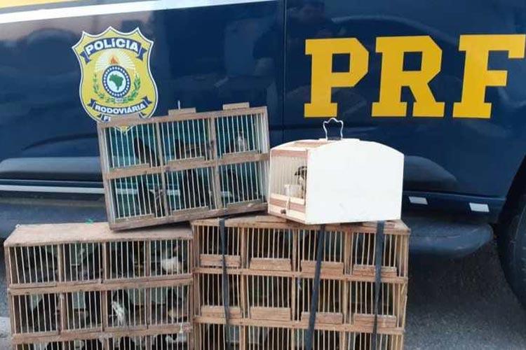 Vitória da Conquista: PRF resgata aves silvestres transportadas irregularmente em bagageiro de ônibus