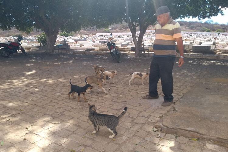 Brumado: Cemitério Jardim Santa Inês vira local de abandono de cachorros e gatos