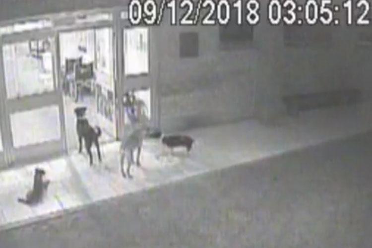 Cães esperam morador de rua na porta de hospital