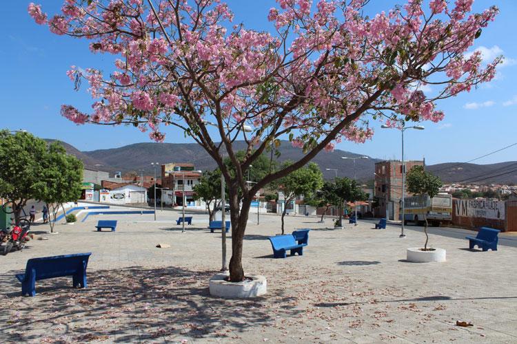 Ipês floridos dão charme colorido e as boas vindas à primavera em Brumado