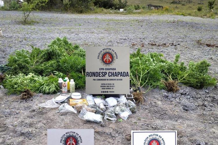Roça de maconha é localizada pela polícia na cidade de Mucugê