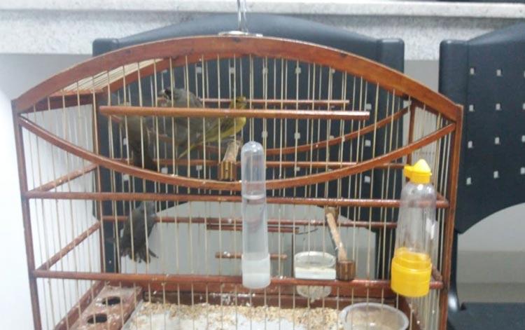 Pássaros silvestres transportados irregularmente são resgatados em Vitória da Conquista