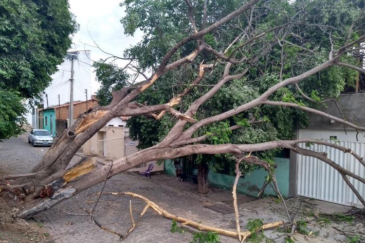 Tempestade de raios derruba árvore e danifica eletrodomésticos em Brumado