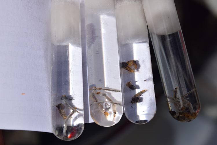 Inverno acende alerta para aumento de doenças transmitidas pelo Aedes aegypti