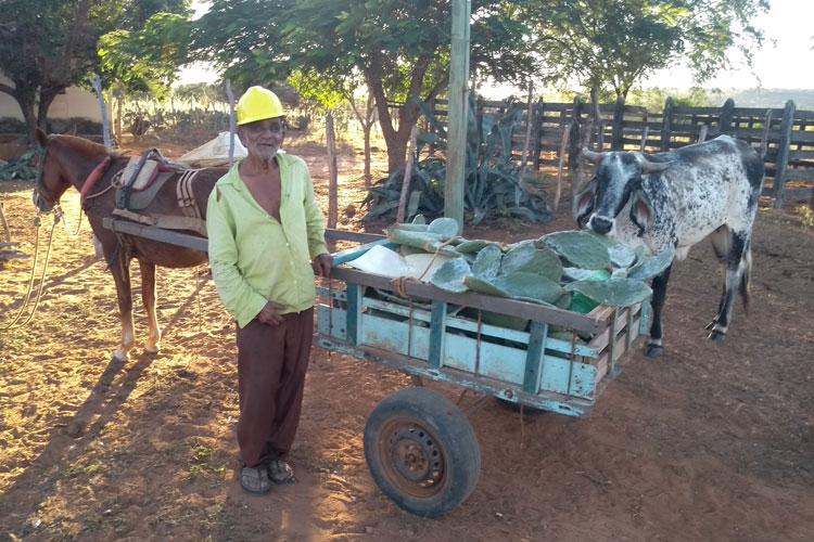 Brumado: Aos 85 anos, Seu Argemiro mantém labuta em cuidar do gado na Lapinha