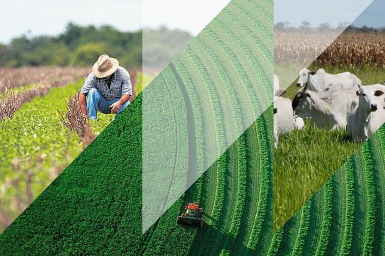 Crédito rural a juros livres ganha cada vez mais competitividade