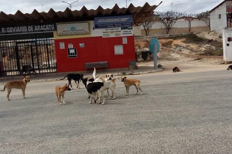 Harly Correia solicita construção de canil para abrigo de animais vadios em Aracatu