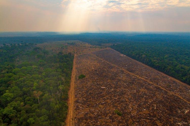Desmatamento na Amazônia atinge maior área desde 2008, aponta Inpe