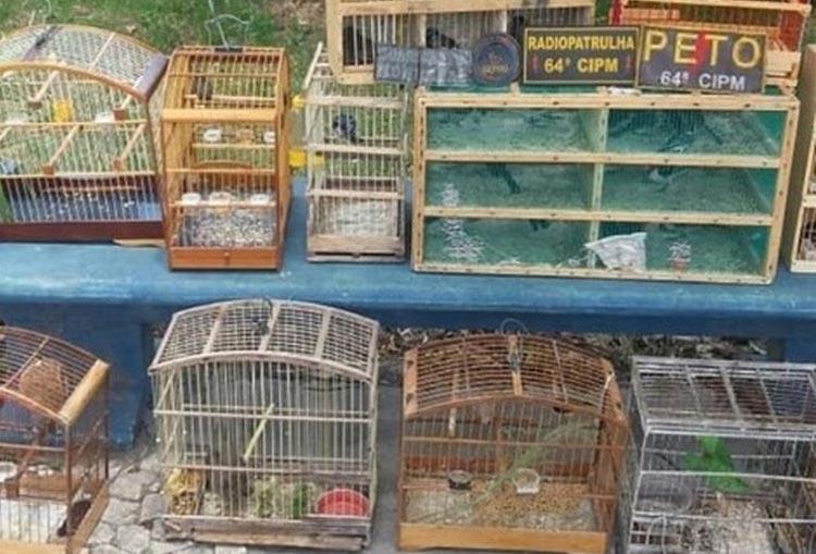 Mais de 60 pássaros silvestres que seriam comercializados são apreendidos em Feira de Santana
