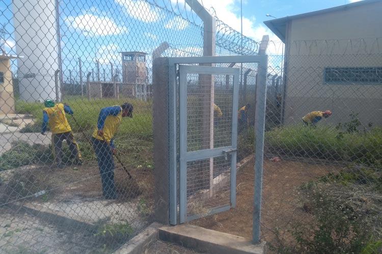 Cobras, bichos peçonhentos e até ramas de melancia são retirados durante limpeza do presídio de Brumado