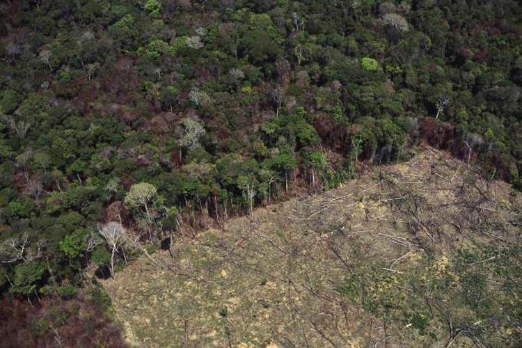 Desmatamento na Amazônia cresce 29,5% em um ano