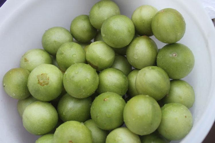 Brumado: Chuva tardia não ajuda a recuperar safra do Umbu e produtores exploram outras frutas