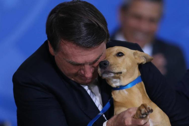 Lei contra maus- tratos a animais passa a valer no Brasil