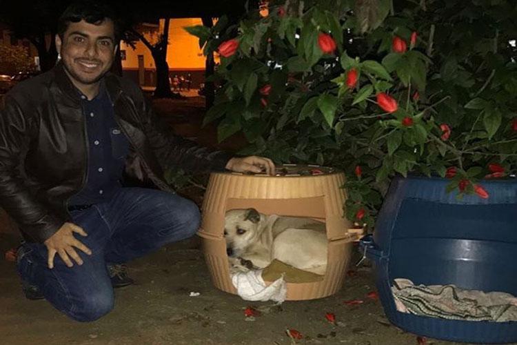 Doações de casinhas térmicas para animais de rua serão feitas em toda a Bahia