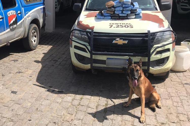 Jequié: Suspeitos de tráfico morrem em confronto com a polícia; cão acha 23,5 Kg de maconha no local