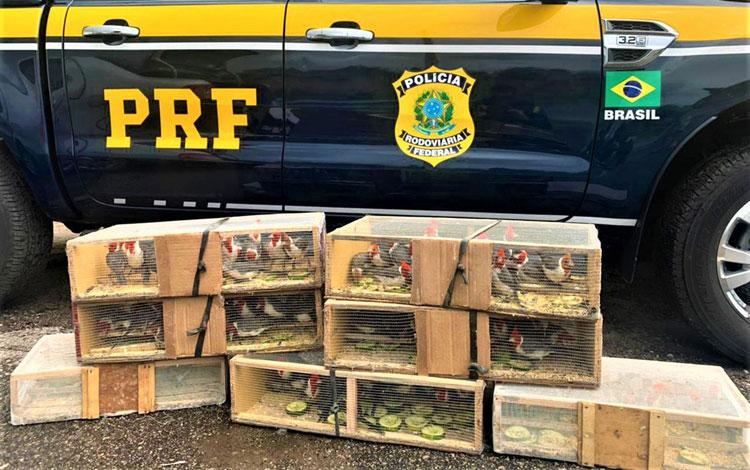 Poções: Mais de 100 pássaros silvestres são achados dentro de porta-malas de carro na BR-116