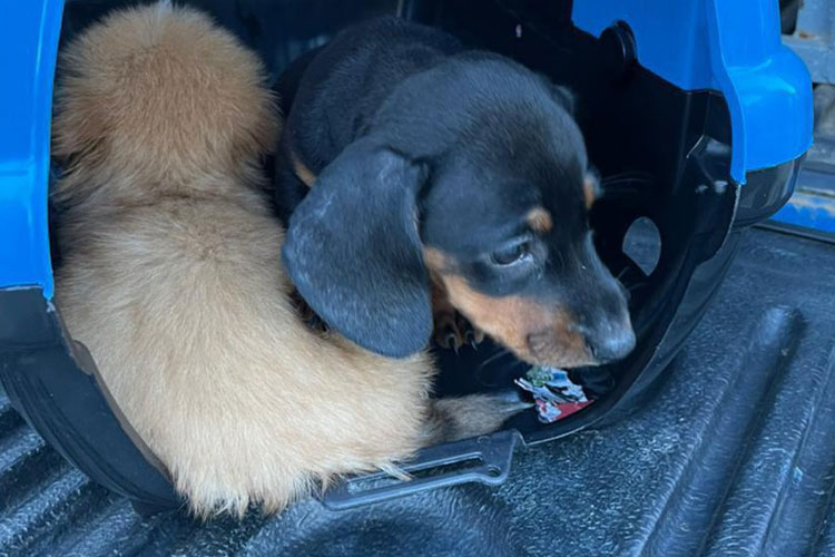 Polícia Civil resgata 46 cachorros em situação de maus-tratos em casa de Vitória da Conquista