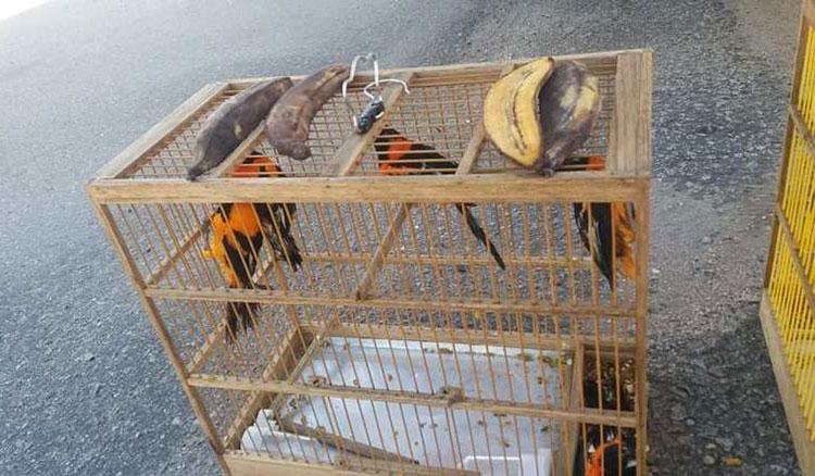 Homem é flagrado com pássaros silvestres em caminhão de carga na BR-116