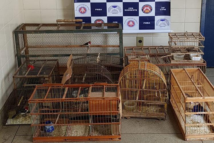 Polícia Militar acaba com comércio ilegal de pássaros silvestres na feira livre de Brumado