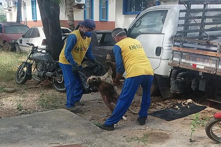 Morre cachorra que vivia há anos dentro da sede da 20ª Coorpin em Brumado