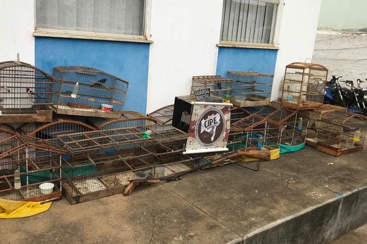 Homem é preso por posse ilegal de arma de fogo e crime ambiental em Licínio de Almeida