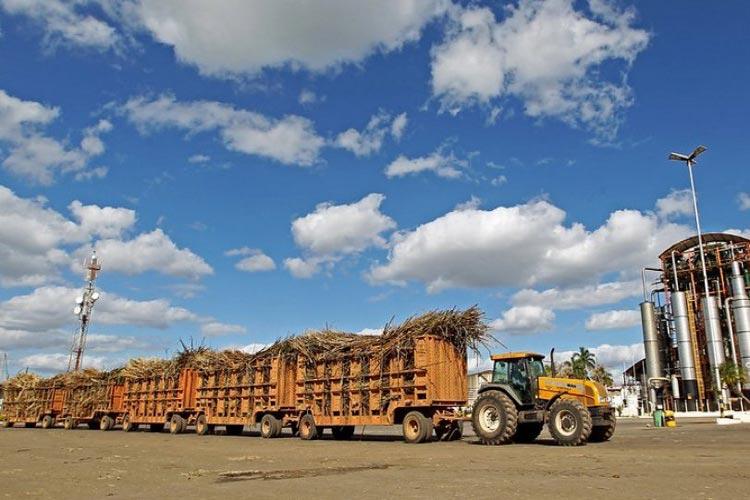 IBGE estima crescimento de 13% da produção de grãos na Bahia
