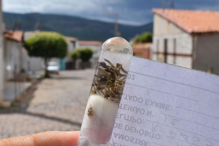 Surto de dengue é registrado na cidade de Paramirim