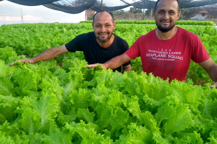 Pedal na Roça: Irmãos produzem alface utilizando hidroponia no sertão brumadense