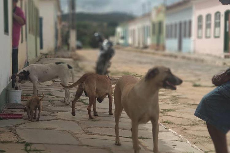 Aumento do número de animais abandonados preocupa população de Rio de Contas