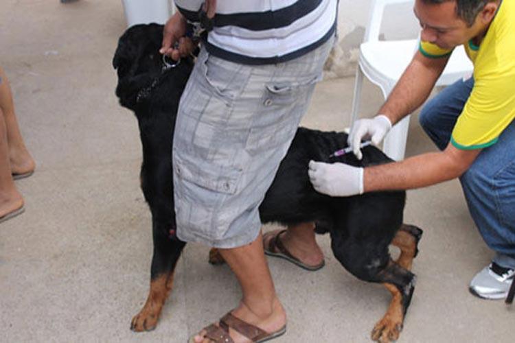 Campanha de vacinação antirrábica tem boa adesão em Brumado