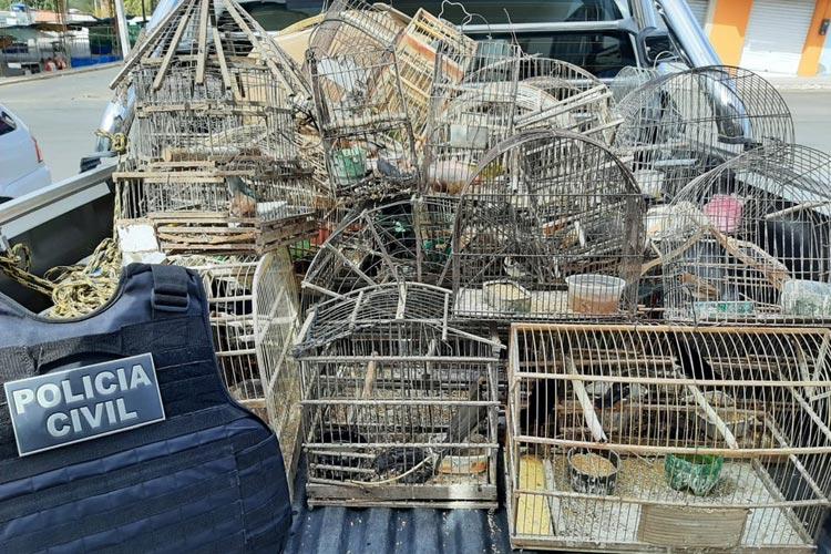 Mais de 30 pássaros silvestres são apreendidos em residência da cidade Anagé