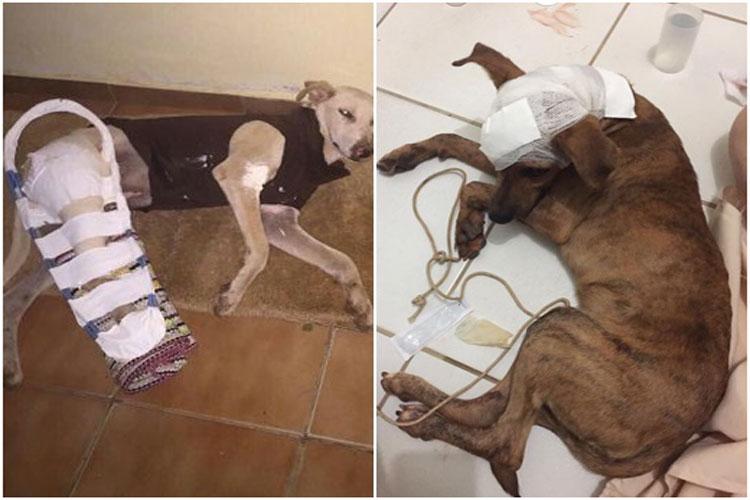 Livramento: Sem dinheiro, Associação Protetora dos Animais pede ajuda