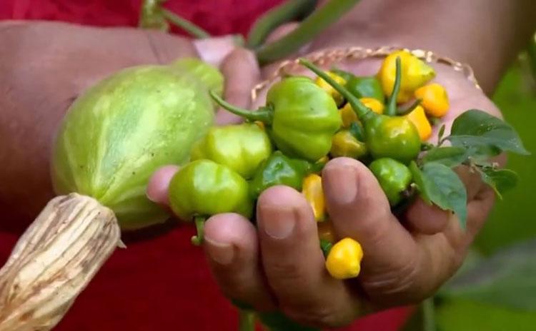 Agricultura familiar: Cooperativas terão linha de crédito para financiamento