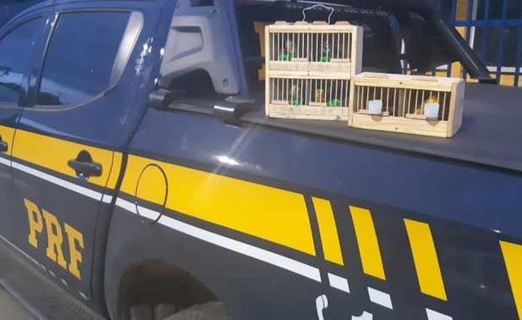 Aves silvestres em situação de maus-tratos são resgatadas em rodovias do interior