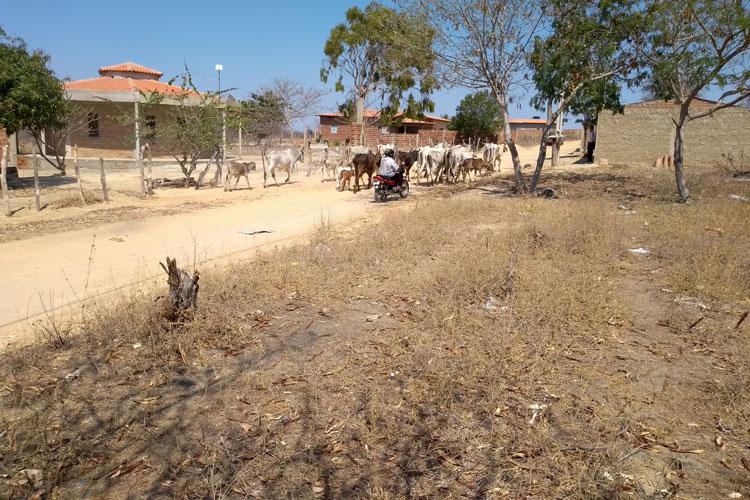 Governo da Bahia decreta emergência em municípios da região sudoeste devido à estiagem