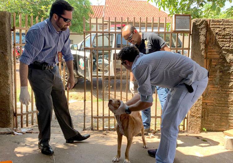 Dono é multado em R$ 3 mil por cão infestado de carrapatos